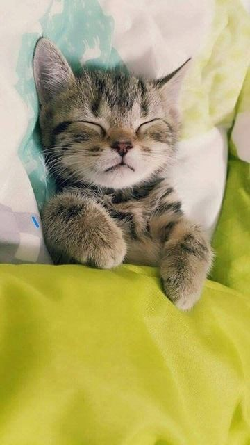 Awesome little kitty ,sleeping beauty