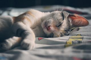 pexels.com/photo/cat-sleeping