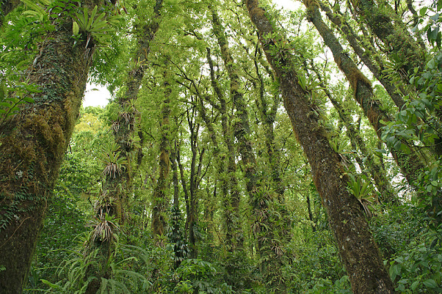 L'intérieur de la forêt tropicale humide
