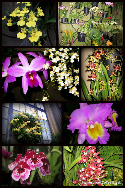 Orchids - A Longwood Gardens PhotoJournal, Part One on Homeschool Coffee Break @ kympossibleblog.blogspot.com