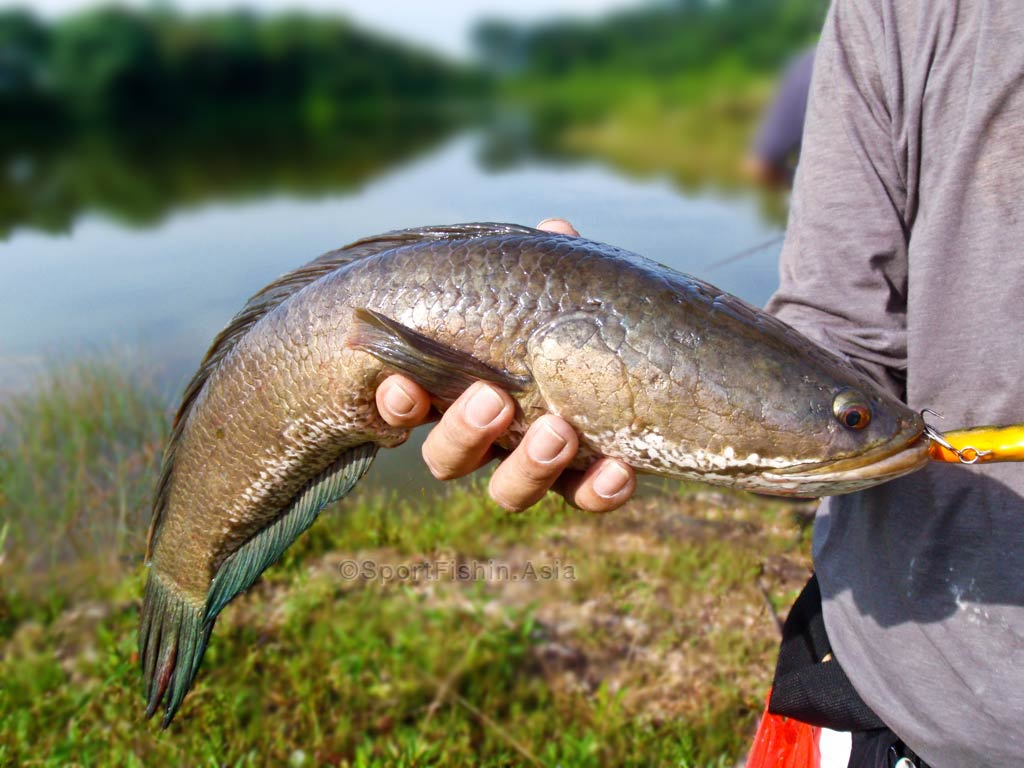 thesis on indian freshwater fish diversity Msc thesis, department of zoology  freshwater fish diversity of western  length-weight relationships of 14 indian freshwater fish species from.