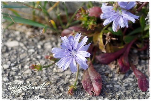 Blume im Salzboden
