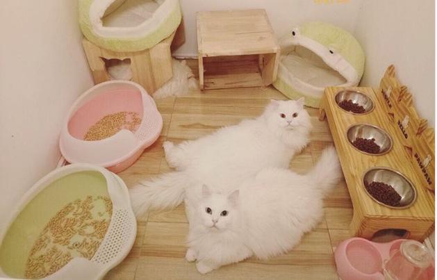 Hotel Bintang 5 Untuk Kucing Begini Mewahnya