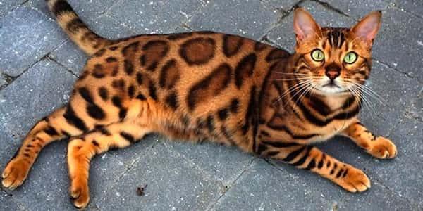 [صورة مرفقة: cat8.jpg]