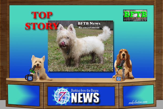 BFTB NETWoof dog news