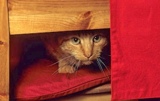 10 Better Reasons to Maintain Cats than Dogs