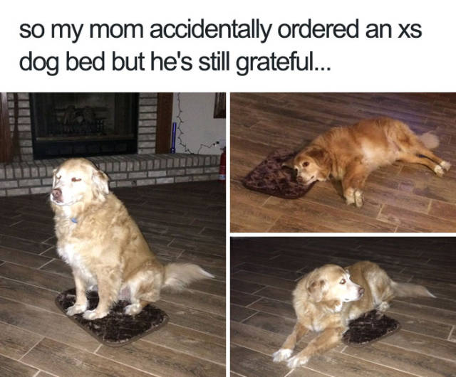 So my mom accidentally ordered an xs dog bed but he's still grateful