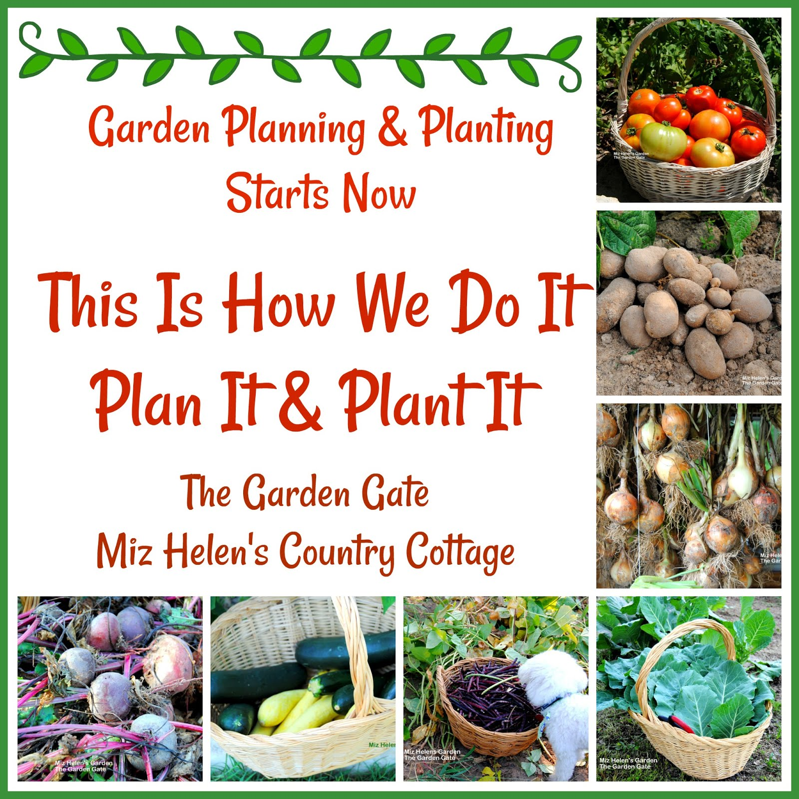 Garden Planning and Planting