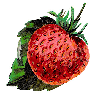 strawberry fruit image clipart botanical illustration digital