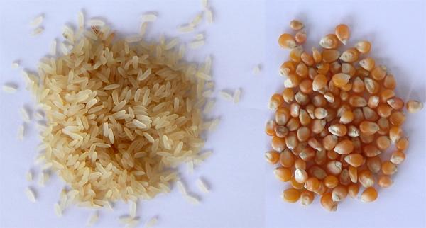 σπόροι, ρύζι, καλαμπόκι
