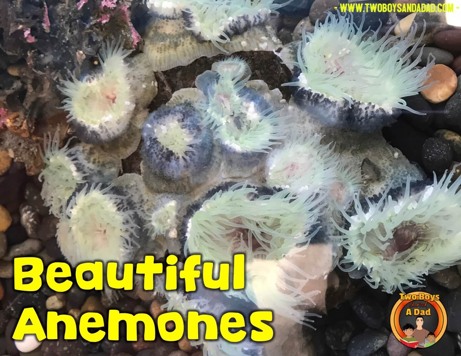 anemones at the science assembly