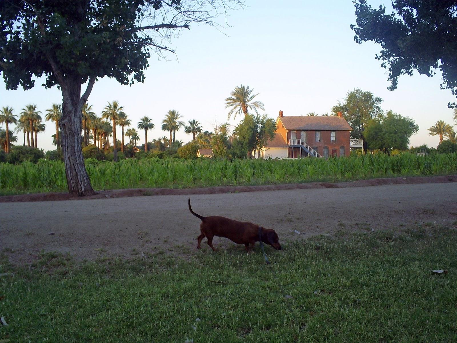 Sahuaro Ranch Dog Park