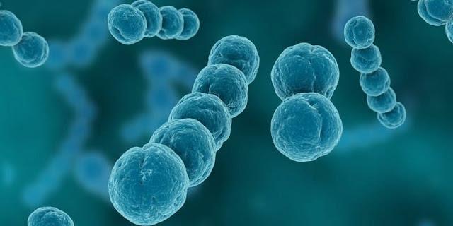 bakteri-dan-virus-penyebab-meningitis