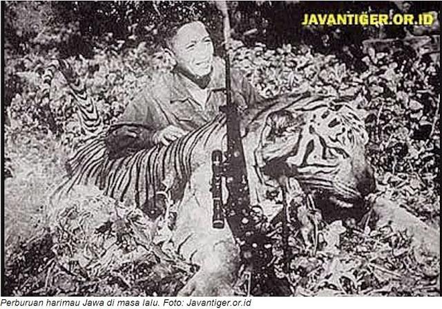 Harimau Jawa Masa Lalu