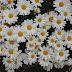 Sunday Flowers #228