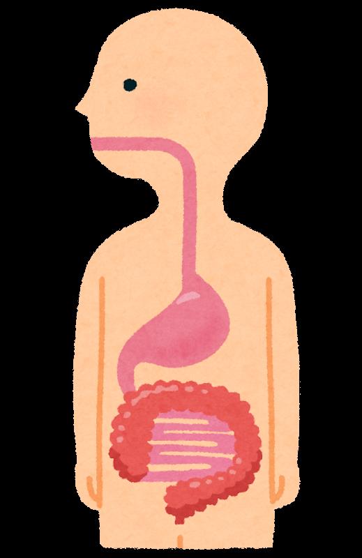 食道胃腸のイラスト人体 かわいいフリー素材集 いらすとや
