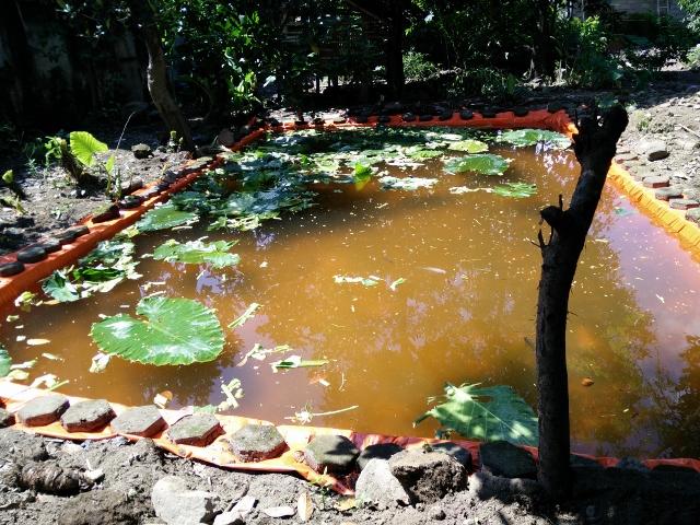 Kolam terpal gali sudah penuh terisi air