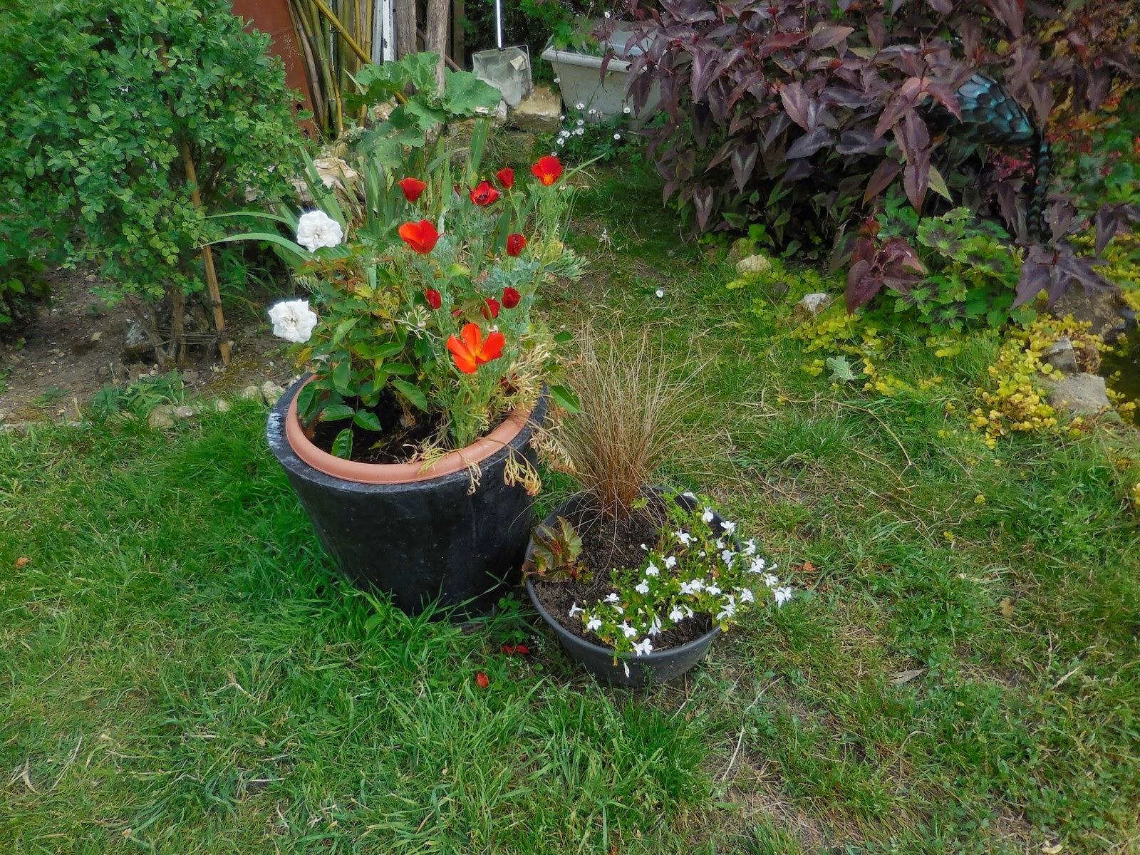 cagouille 39 s garden les premi res fleurs du sol. Black Bedroom Furniture Sets. Home Design Ideas
