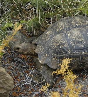 Karoo National Park reptiles