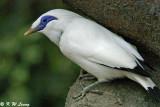 Burung Yang Di Lindungi