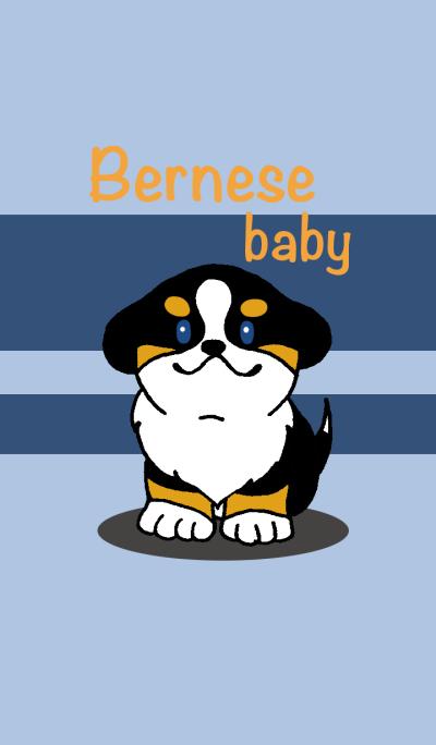 Bernese baby.