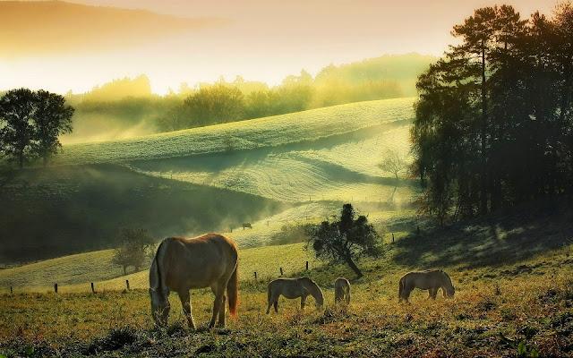 Mooi landschap met paarden in het weiland