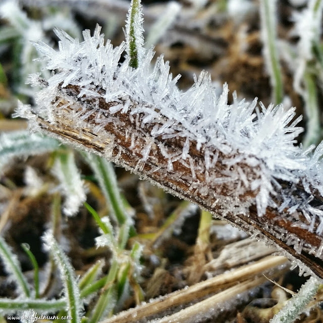 Frost on a stick