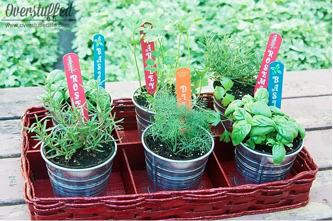 Patio Herb Garden & Patio Herb Garden - Overstuffed
