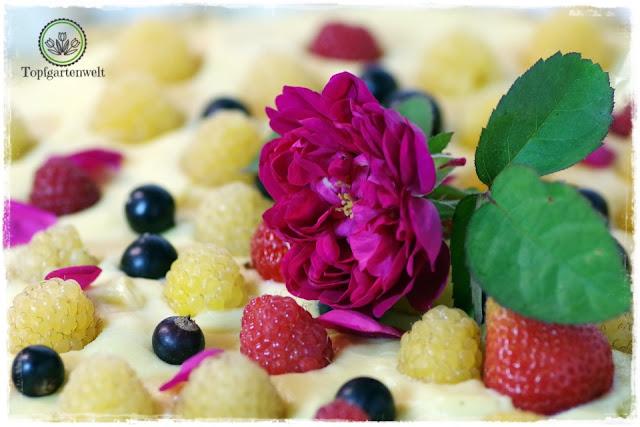 Rosentarte mit frischen Beeren aus dem Garten - Foodblog Topfgartenwelt