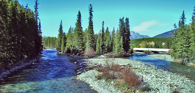 The Bow River near Banff
