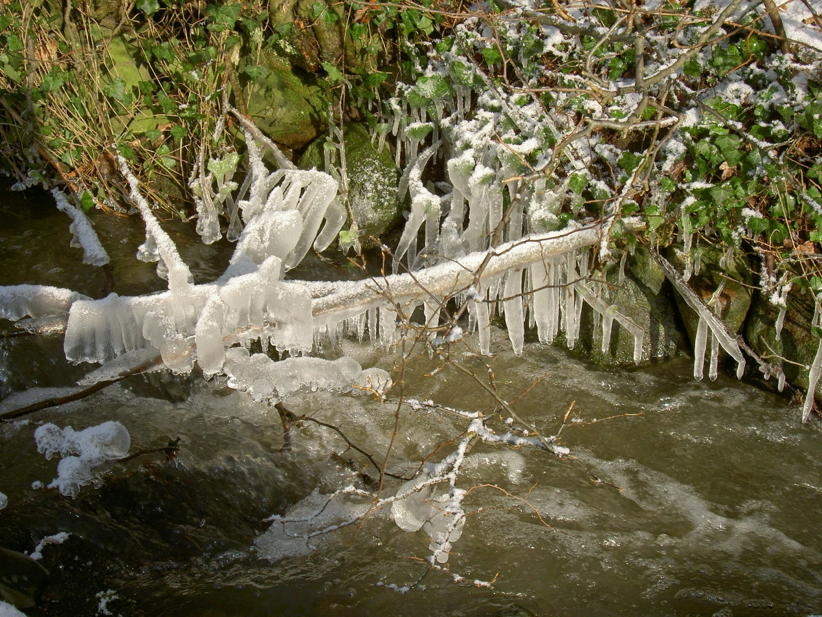 Bach im Winter: Äste, die in den Bach hängen, sind vereist.