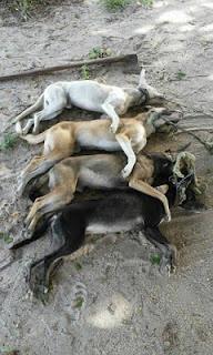 Homem mata 4 cachorros enforcados e revolta população em São Vicente do Seridó