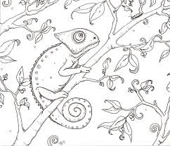 Download Chameleon On Garden Coloring Pages