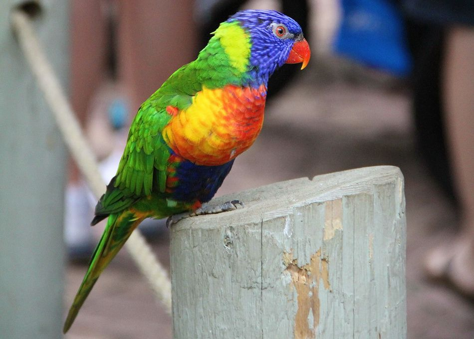 Colorful Parrot by Danny VB
