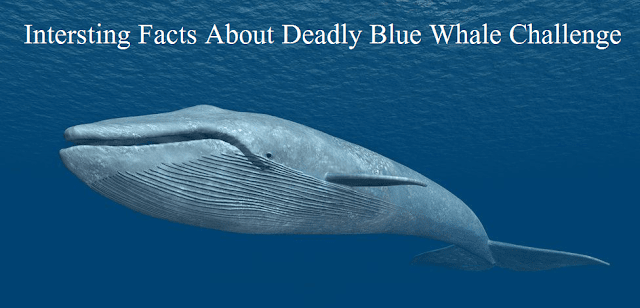 Deadly Blue Whale Challenge