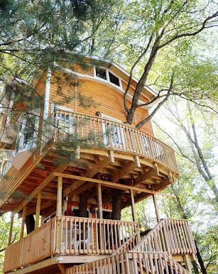 Casa del árbol para adultos.