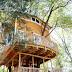 Abuelo construye casa del árbol épica para sus nietos.