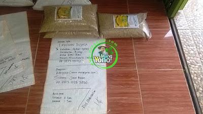 Benih pesanan  I NYOMAN SUYASA Bau-Bau, Sulteng   (Sebelum Packing)