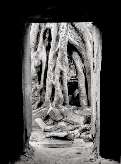 Arbre d'Angkor - Siem Reap - Khmer Cambodge