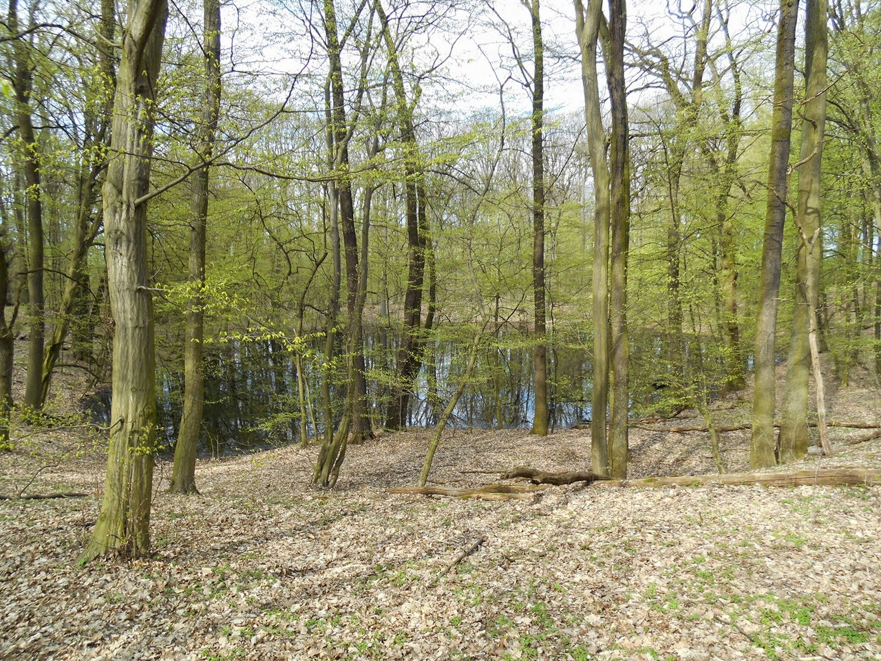 historia, las, drzewa, woda