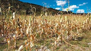 la sequía reduce el PBI
