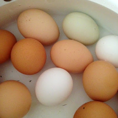 rainbow of farm fresh eggs in pot of water boiling