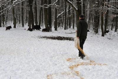 Hargita megye, vadállatok, vadetetés télen, erdészet, Székelyföld