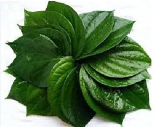 manfaat daun sirih untuk wajah bopeng,manfaat daun sirih untuk jerawat,efek samping daun sirih untuk wajah,manfaat daun sirih untuk kecantikan,manfaat daun sirih merah untuk kesehatan,manfaat daun sirih merah untuk wajah,manfaat daun sirih,manfaat daun sirih bagi wanita,manfaat daun sirih untuk mata,cara memutihkan wajah dengan daun sirih,manfaat daun sirih merah untuk kecantikan