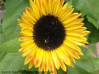Sonnenblume: Foto von Stampin' Up! Demonstratorin in Coburg