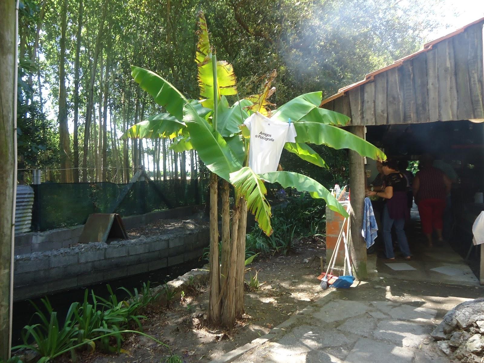 Gravid sopade banan med lag norberg
