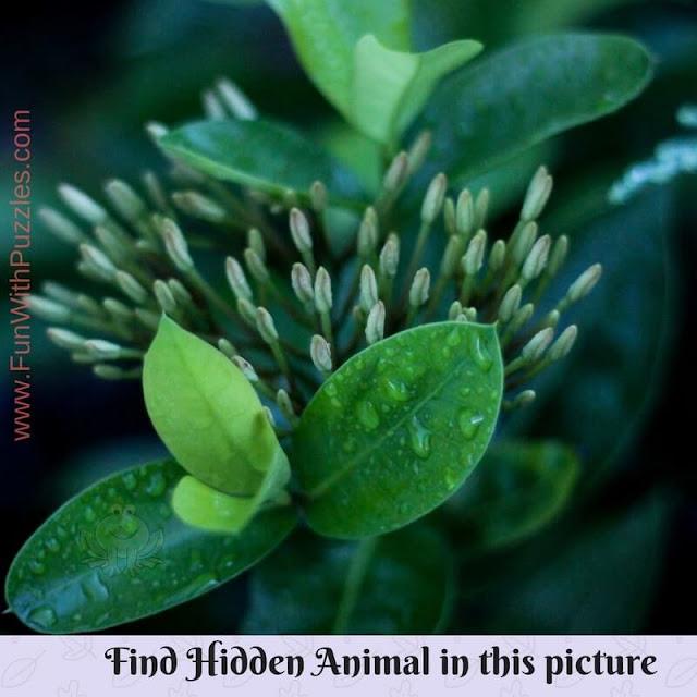 Hidden Animal Picture Brain Teaser