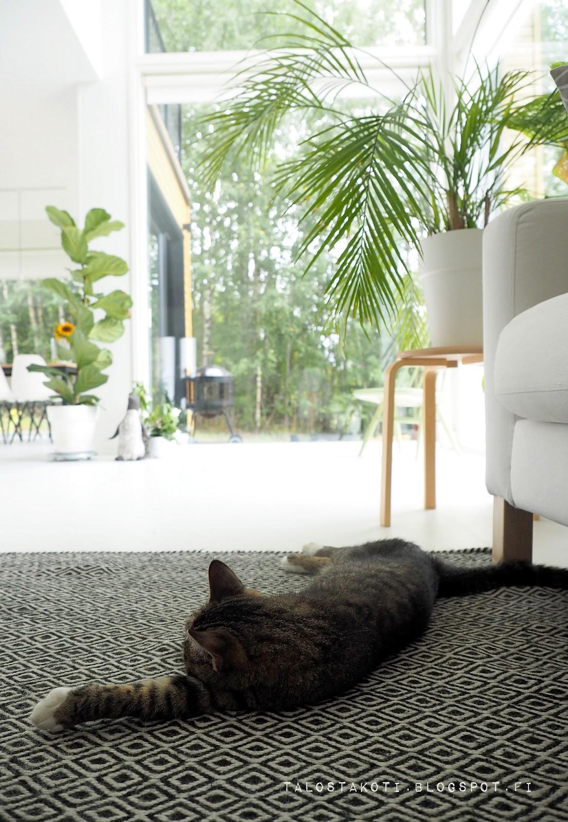 Kissa pötköttää, olohuone, viherkasvi, sisustus