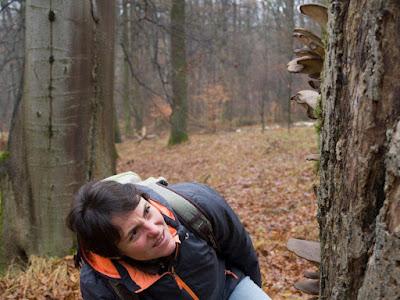 grzyby 2016, grzyby w grudniu, grzyby zimowe, grzybobranie w grudniu, grzyby w Lasku wolskim, grzyby w Krakowie, boczniak ostrygowaty Pleurotus ostreatus, uszak bzowy, płomiennica zimowa, zimówka