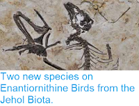 http://sciencythoughts.blogspot.co.uk/2014/07/two-new-species-on-enantiornithine.html